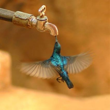 birdsiptap